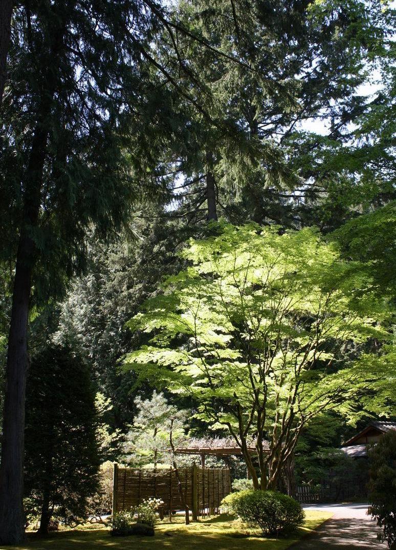 Portland Japanese Garden C