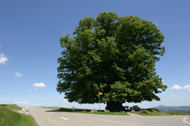 trees-1-cover-photo